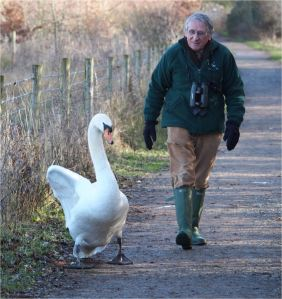 Walking with swans