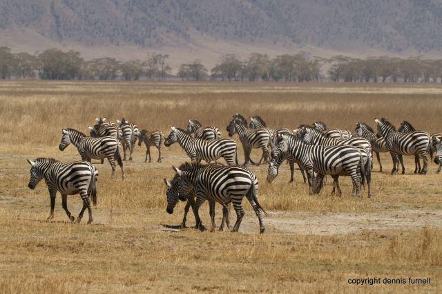 EA_2_Serengeti